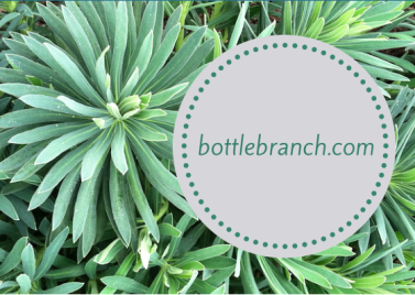First Side of BottleBranch card