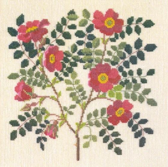 GB.rosamoyesii