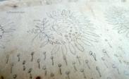 EVH regency embroidery pattern