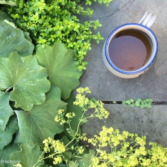 garden puttering ephpyle