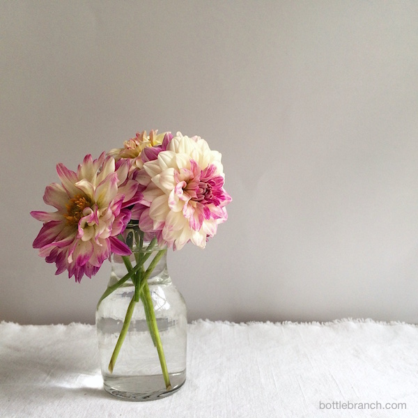 dahlias by ephpyle