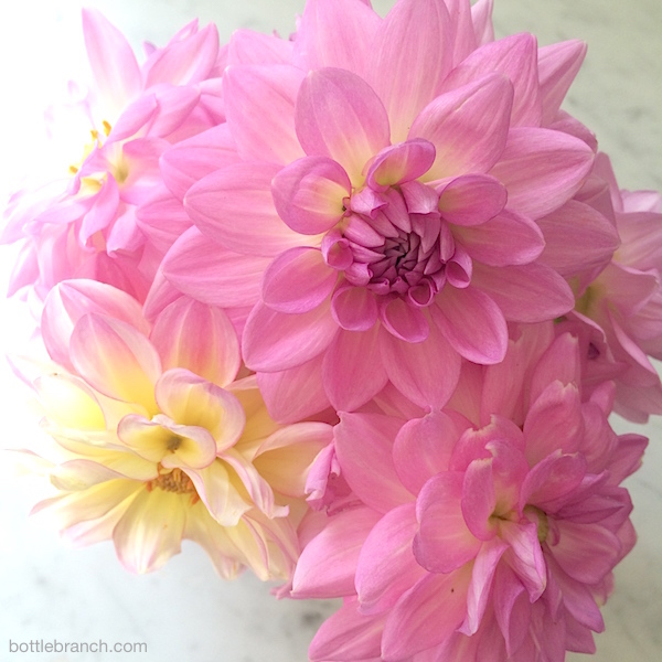 dahlias of 2014 by ephpyle