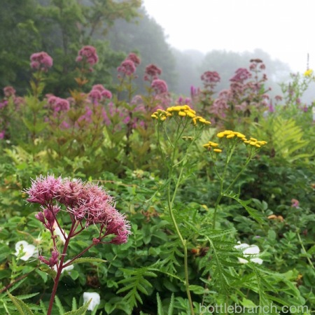 new england wild flowers