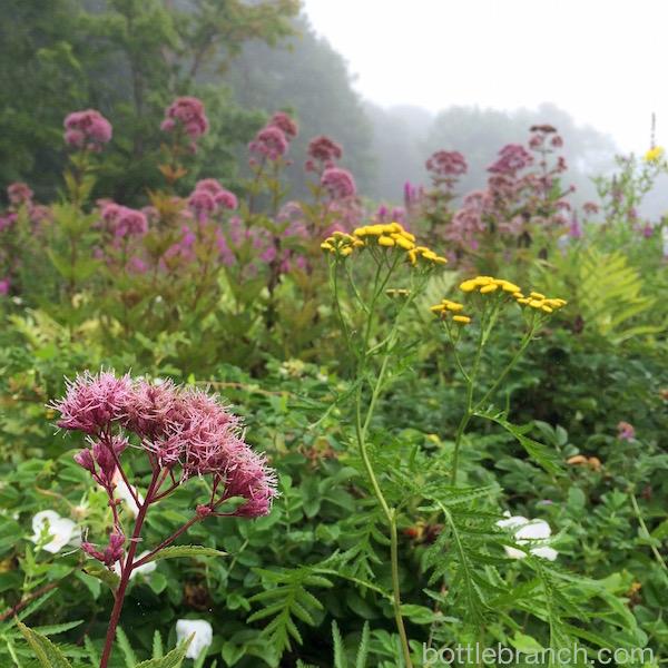 new england wild flowers