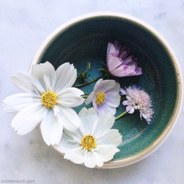 bowl of cosmos