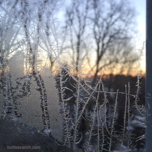 frost on window bottle branch blog