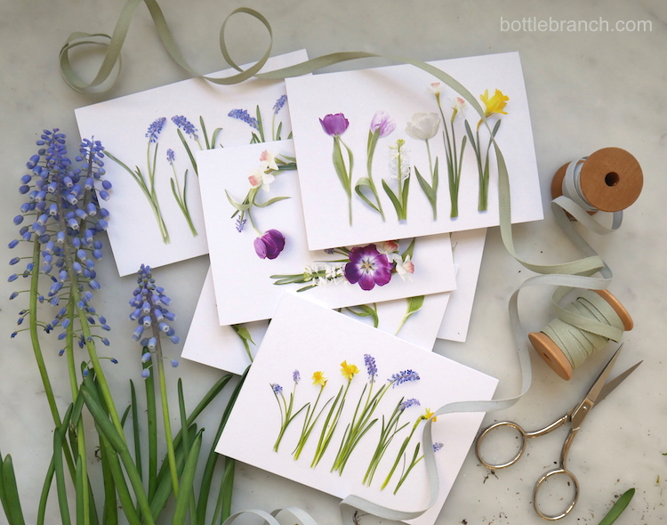 spring bulbs cards celebrate bottle branch