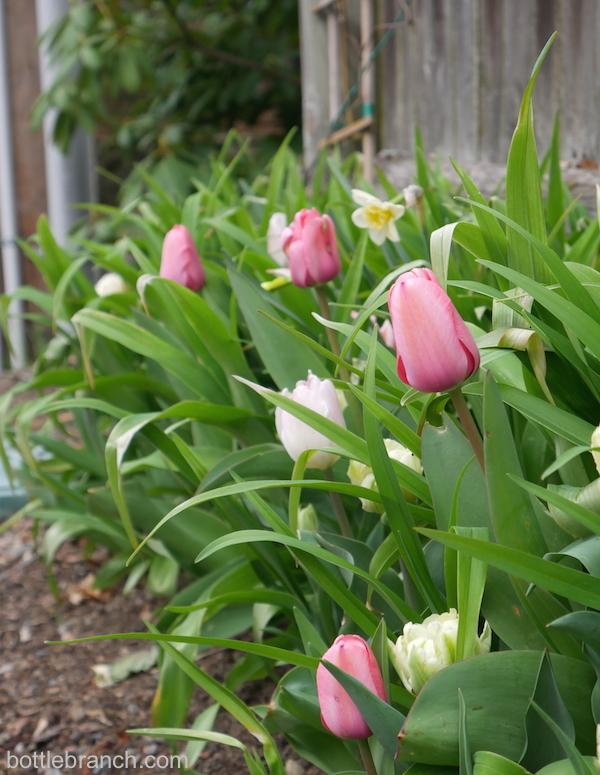 tulips in the garden bottle branch