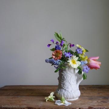 Muscari, primrose, spring flowering pea, tulip, narcissus, vinca minor, geum