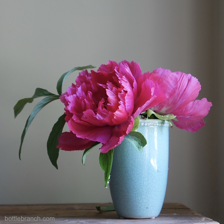 hot pink peonies bottle branch blog