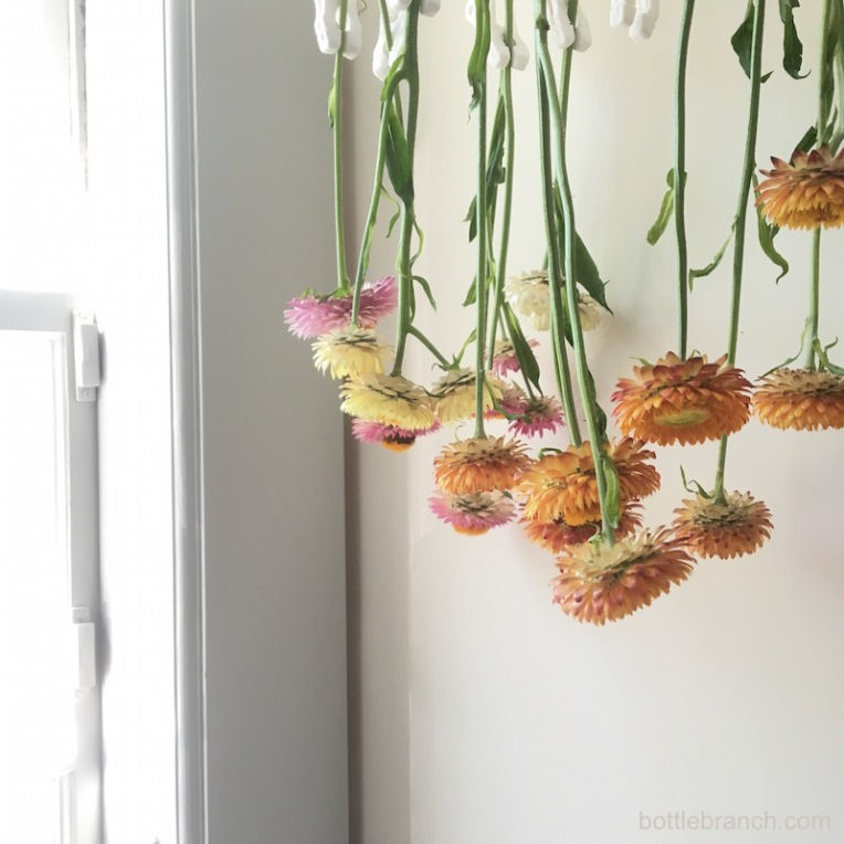 drying-strawflowers-on-bottle-branch-blog