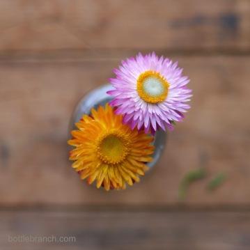 two-straw-flowers-bottle-branch-blog