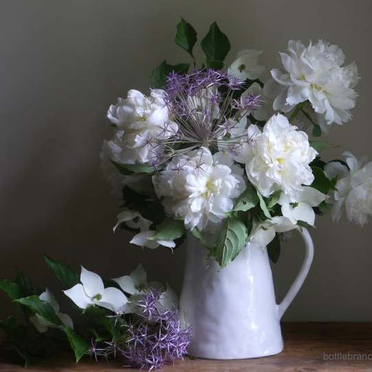White peonies, Allium, Kousa dogwood