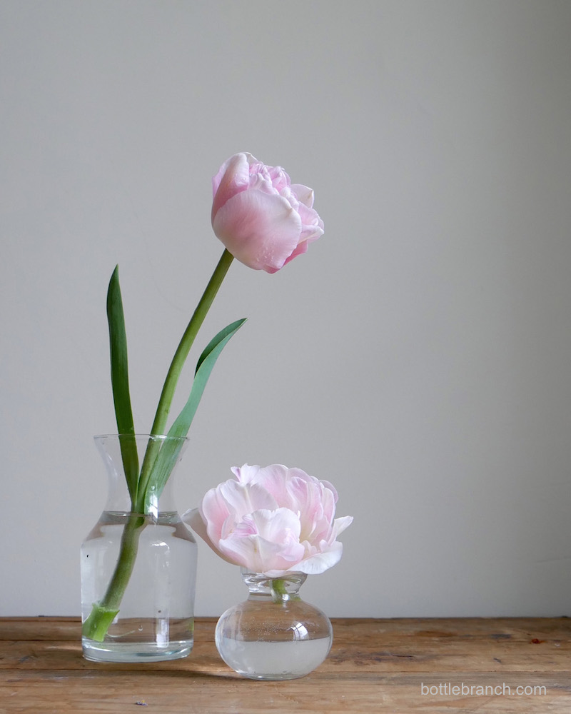 pink-tulips-bottle-branch