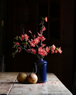 stilllife with quince by elizabeth pyle