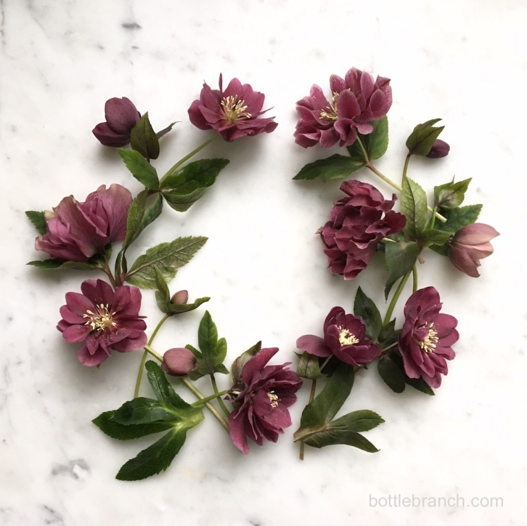 hellebore wreath bottle branch blog