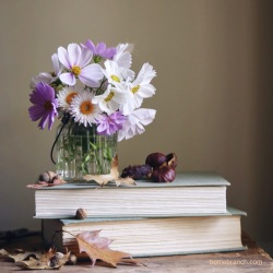 autumn flowers with cosmos bottle branch blog