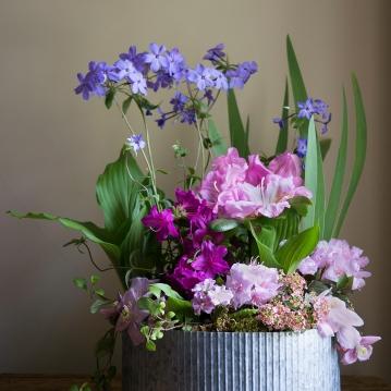 Creeping phlox, Rhododendrons, Hosta leaves, Iris leaves, Alyssum, Clematis 'mayleen'