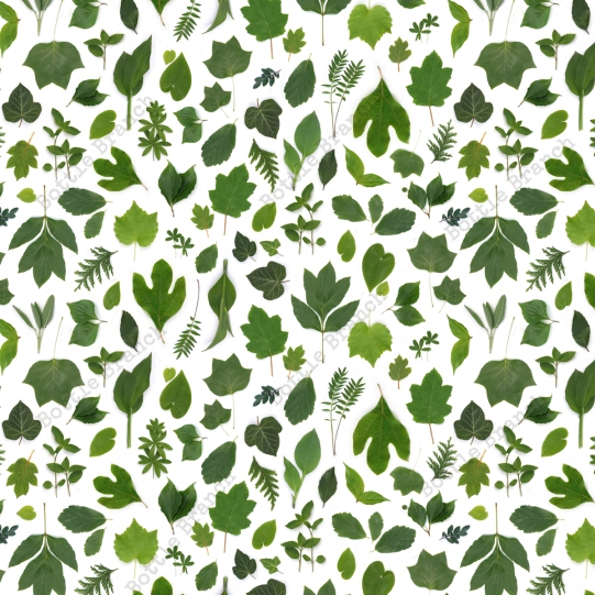 green leaves repeating pattern by bottle branch