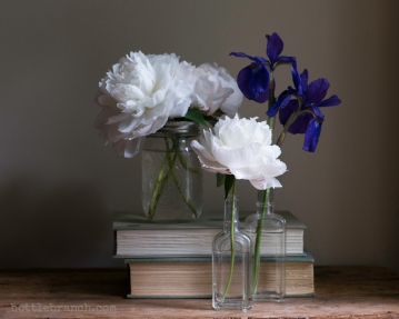 Peonies and siberian iris