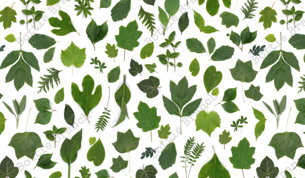 green-leaves-repeating-pattern-by-bottle-branch-rectangle.jpeg