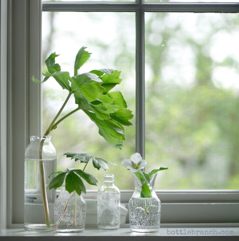greenery in the window bottle branch
