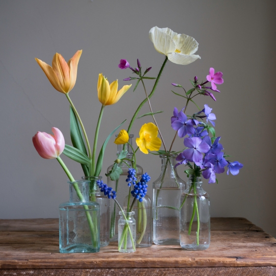 rainbow still life with orange tulips small by elizabeth pyle
