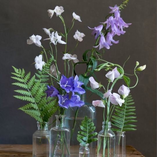 still life with delphiniums small by elizabeth pyle