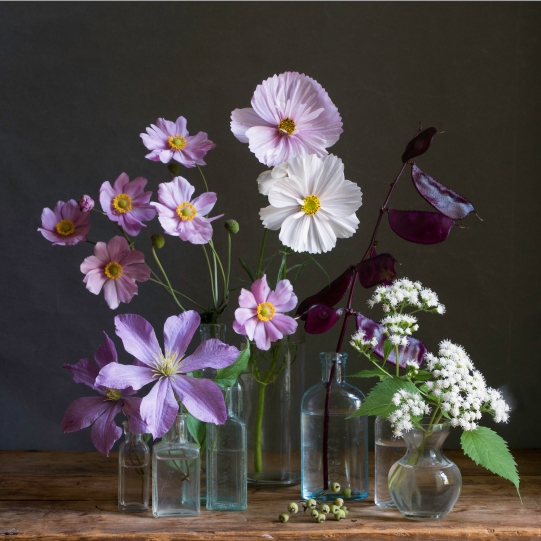 still life with japanese anemones small by elizabeth pyle